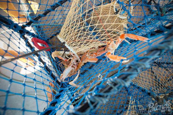 Crayfishing