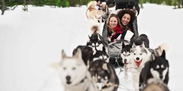 Dog Sled Banff
