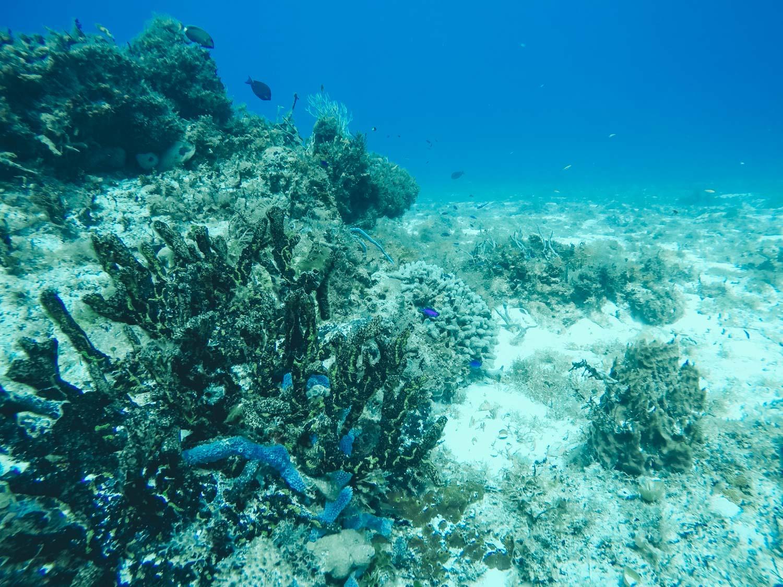 Coral in Cozumel