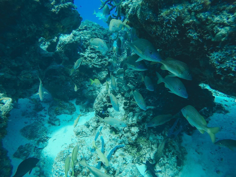 School of Fish in Cozumel