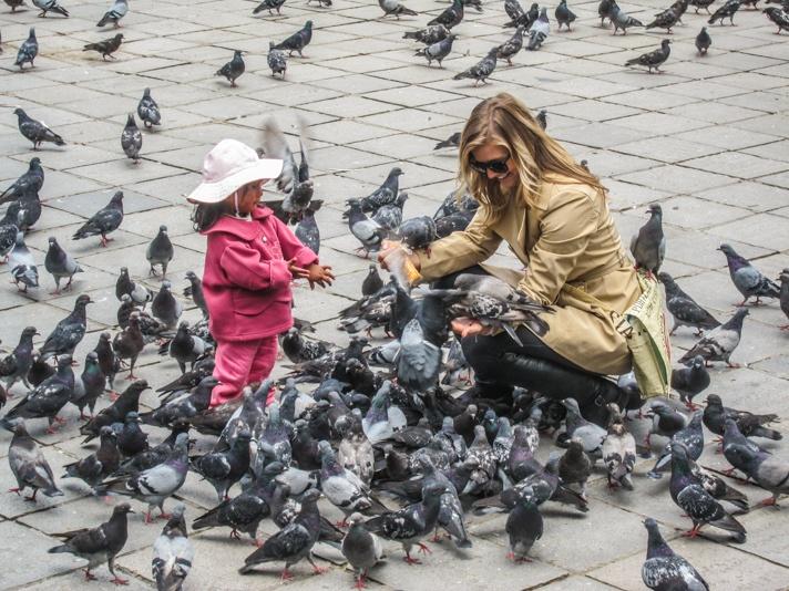La Paz Pigeons in Bolivia