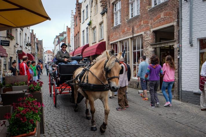 Horse in Bruges