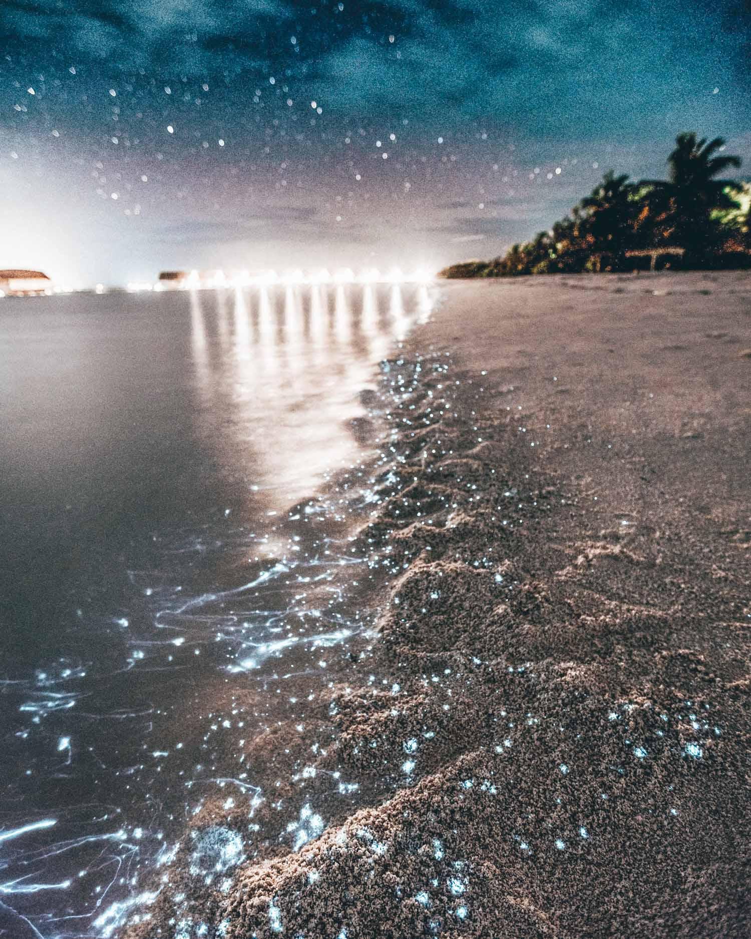 Take a Bioluminescent Bay Kayaking Tour