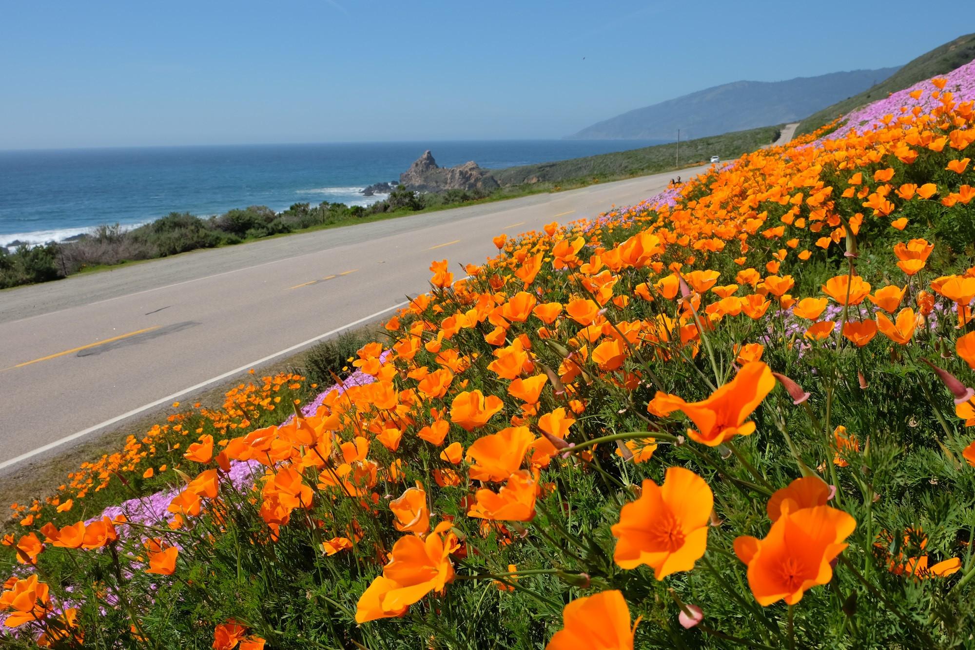 California Highway 1 Road Trip