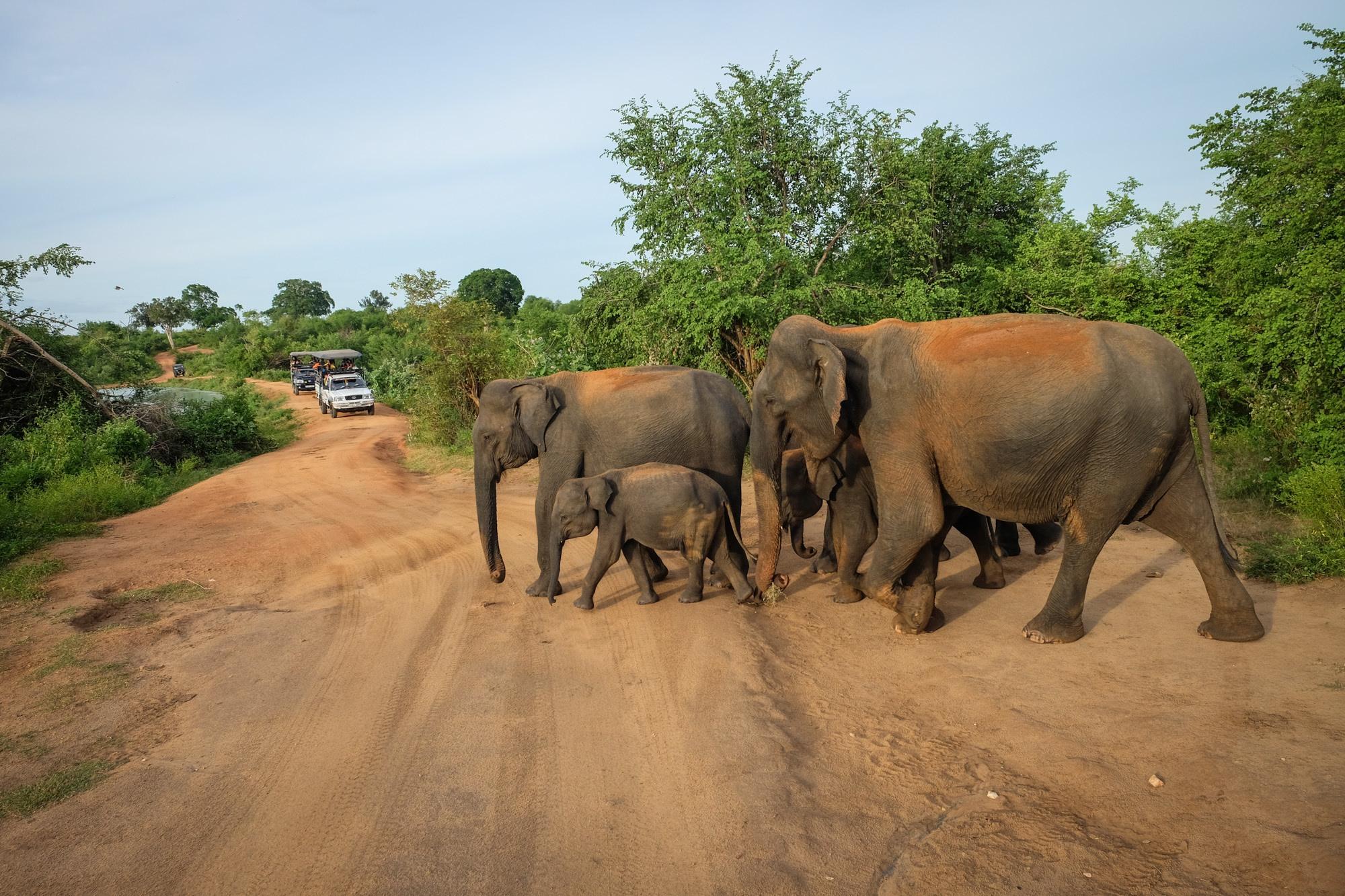 Walkers Tour Sri Lanka