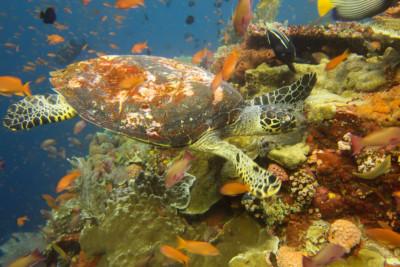 Diving Komodo Islands