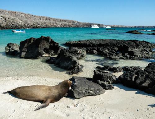 Visiting Genovesa Island in the Galápagos