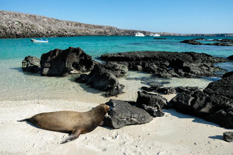 Genovesa Island, Galapagos