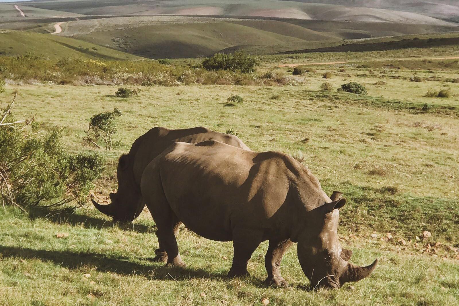 Big Five at Gondwana Game Reserve