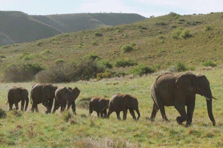 Elephants at Gondwana Game Reserve