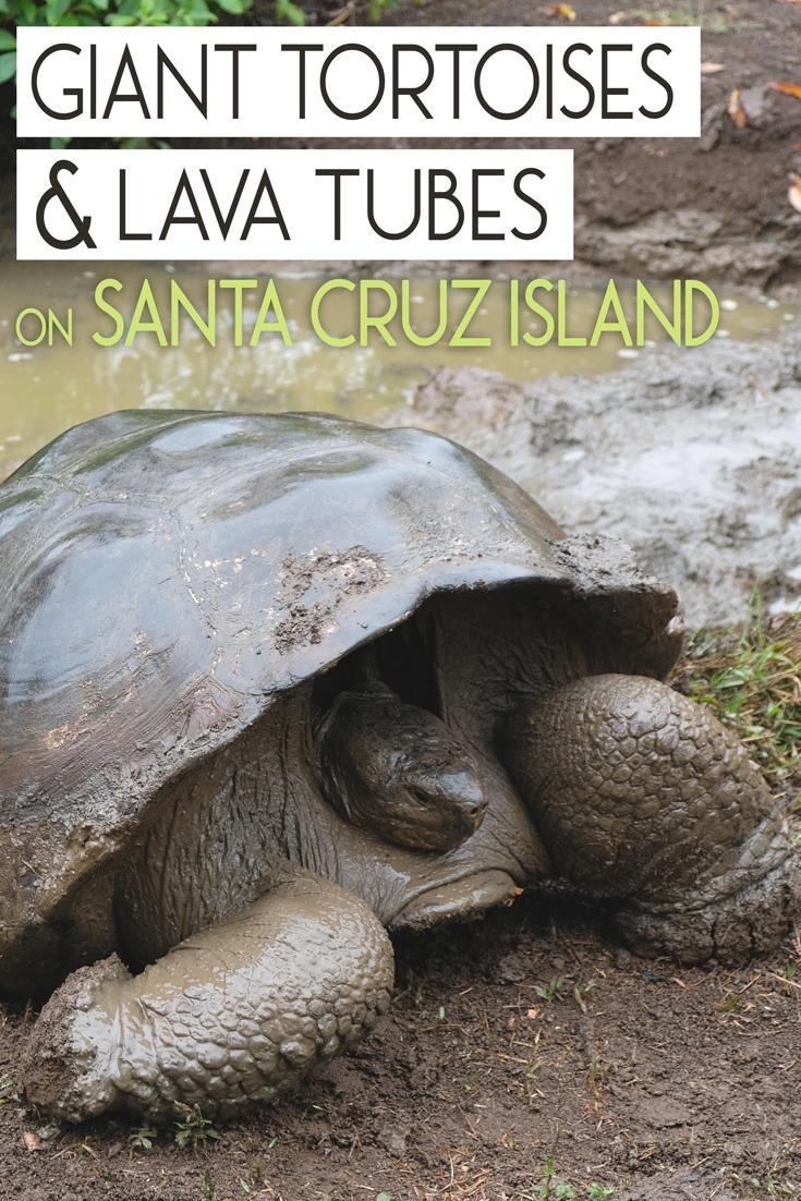 Tortoises and Lava Tubes on Santa Cruz Island