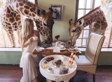 visiting giraffe manor in kenya