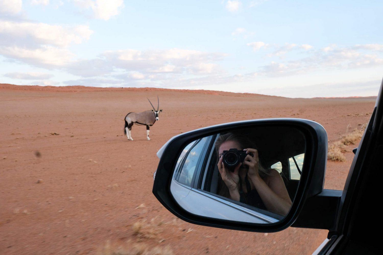 Animal Sighting in Namibia