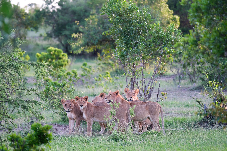 Shooting wildlife on safari