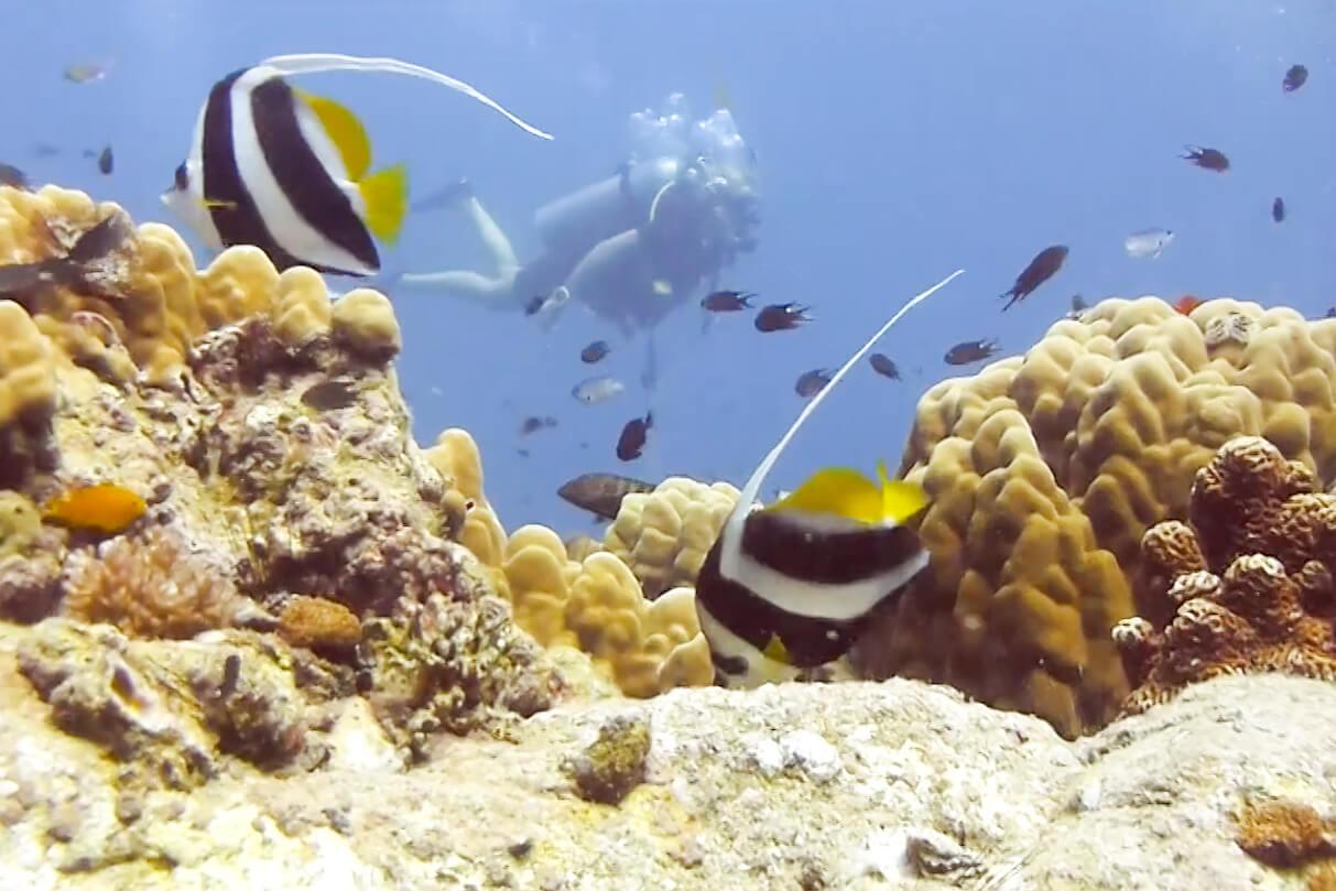 Coral Reef in Koh Tao