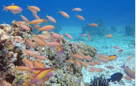 fish in gili t