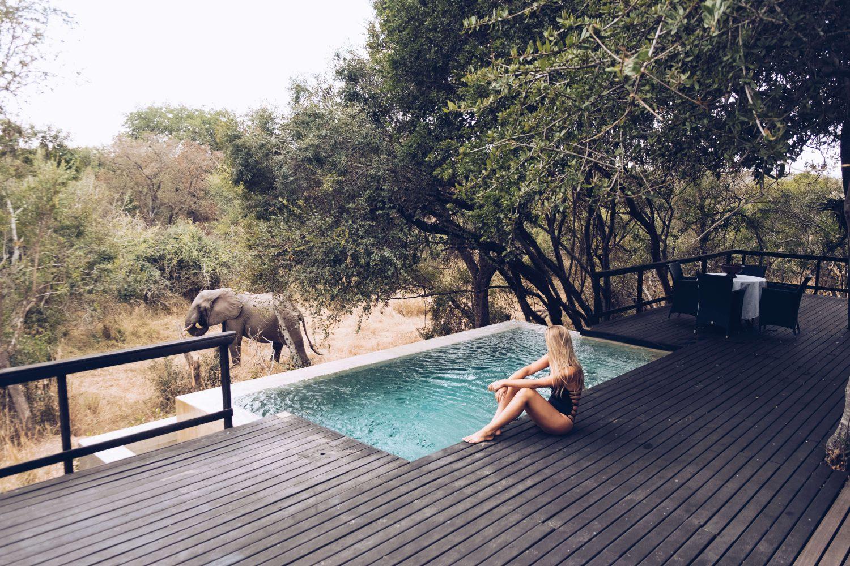 Royal Malewane Safari Lodge