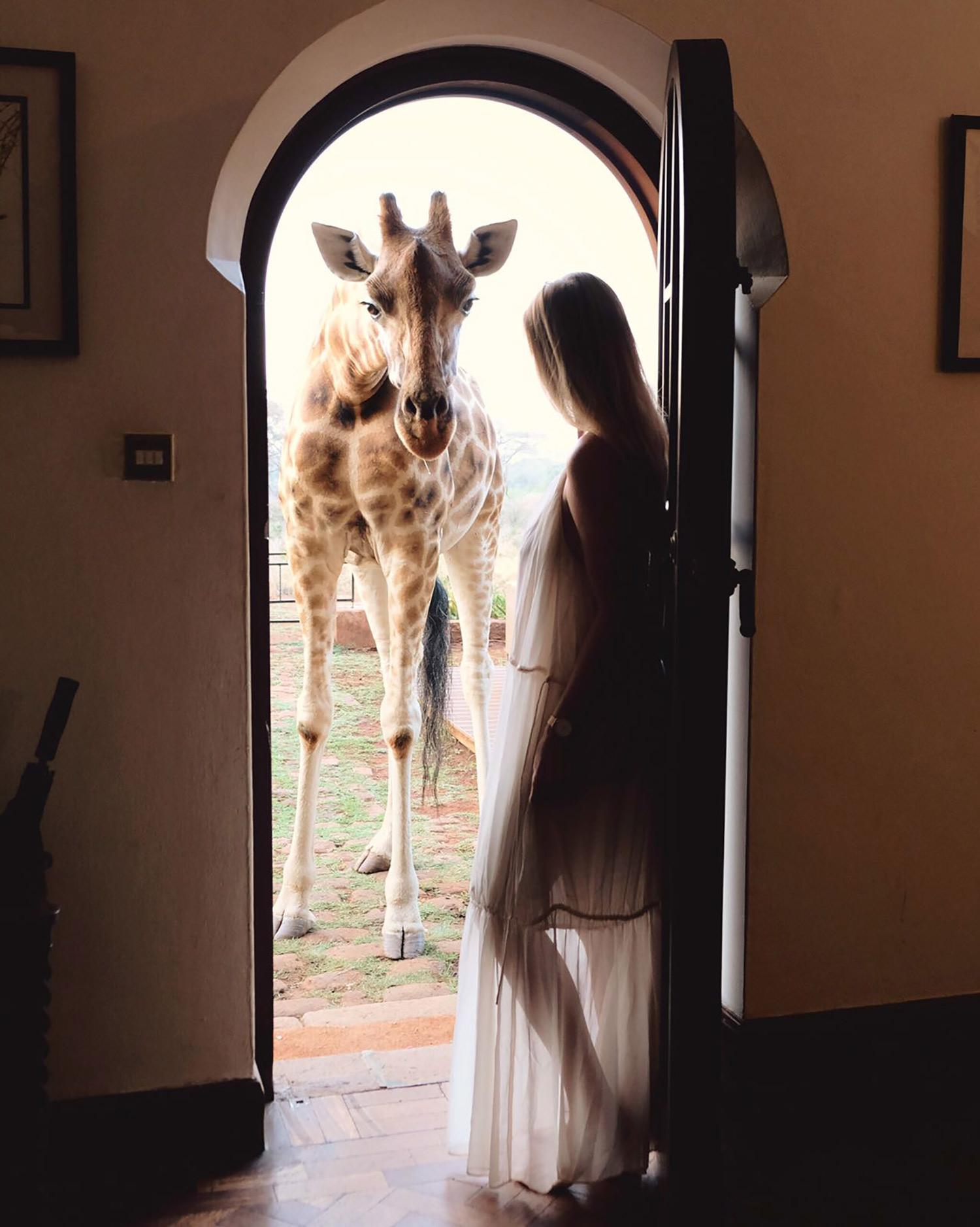 Kiersten Giraffe Manor
