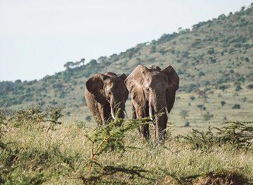 Elephant 20 Kenya Featured