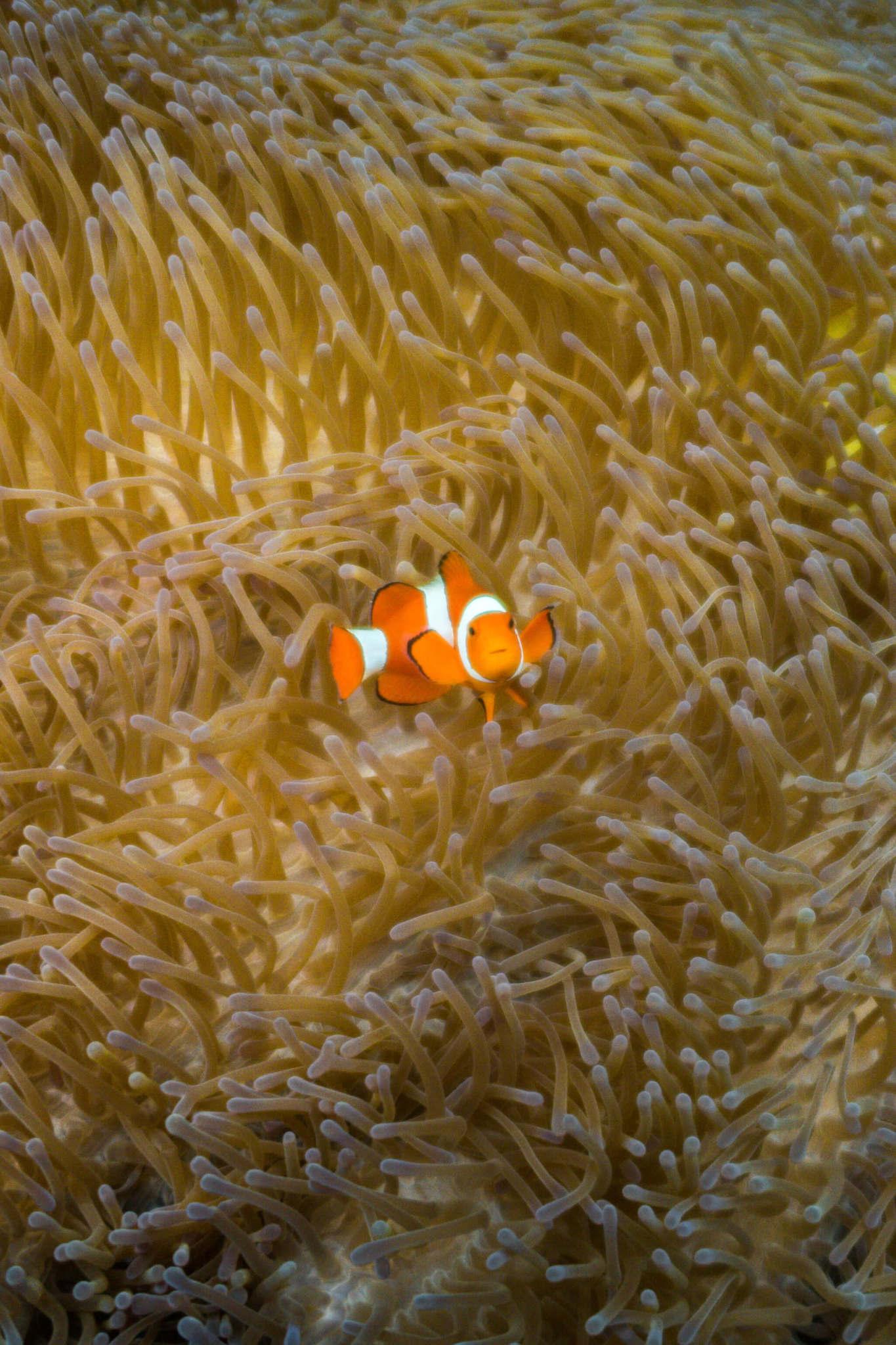 Fish in Raja Ampat