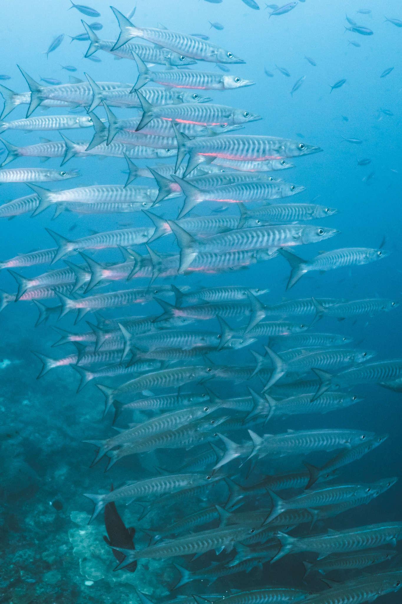 Under the sea Raja Ampat