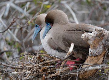 birds in galapagos