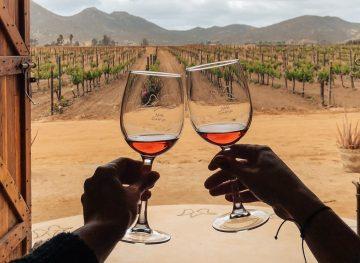 Wine Tasting in Valle de Guadalupe in Mexico