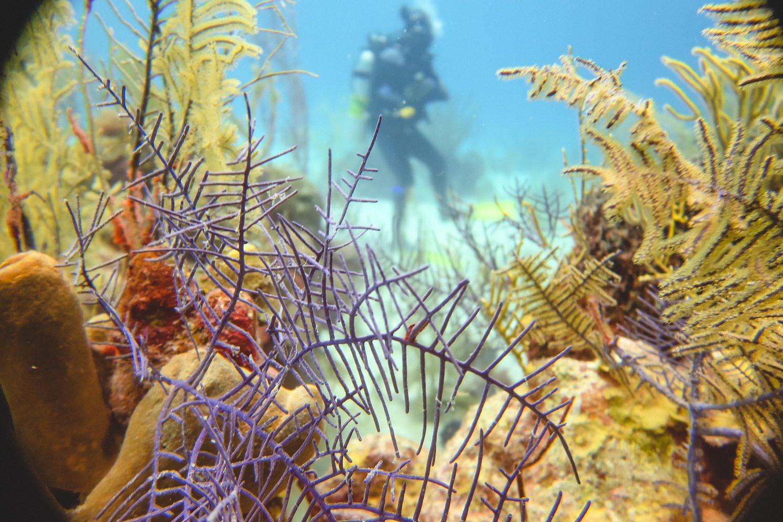 Underwater Blue Hole in Belize