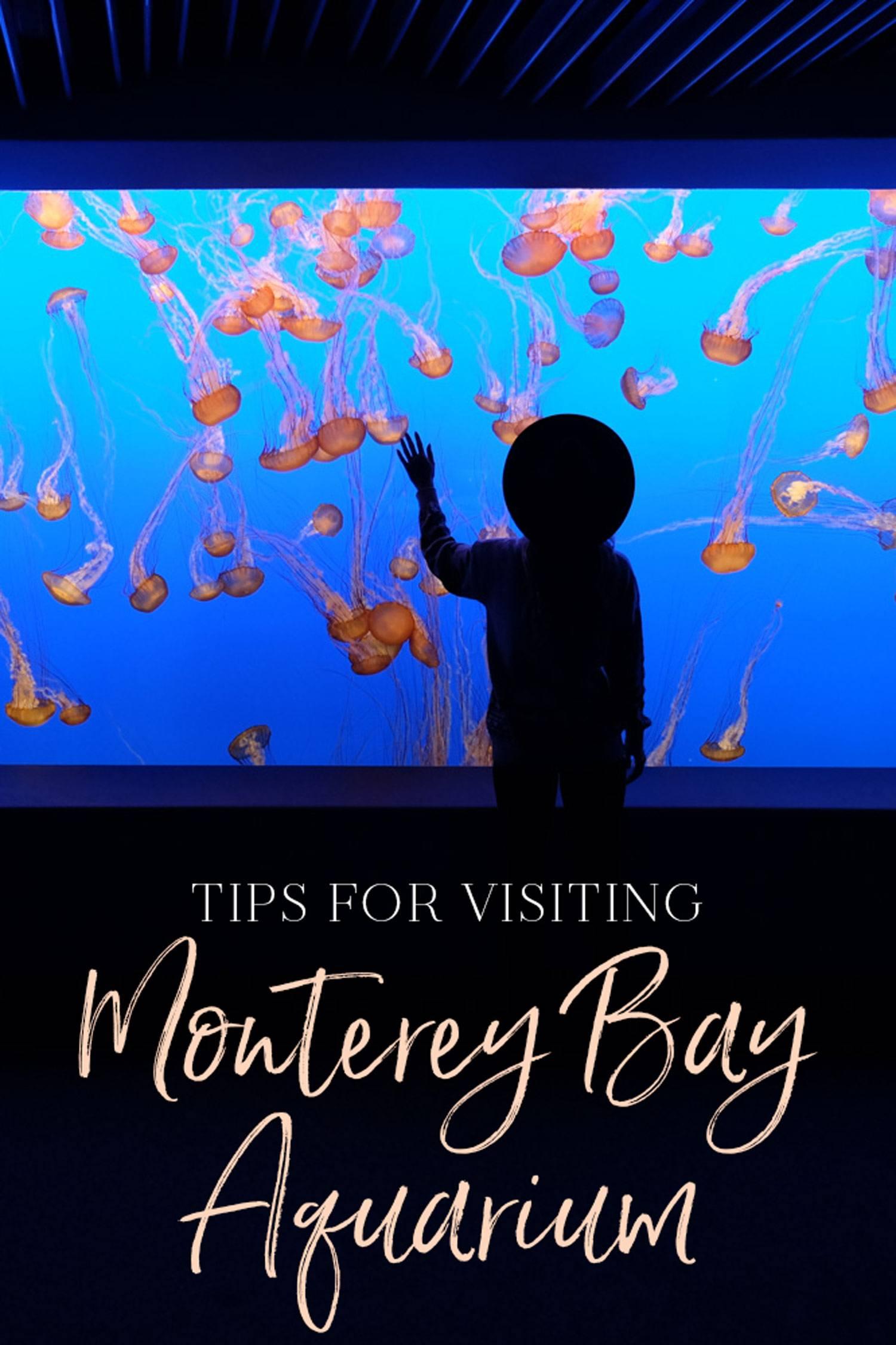 Tips for Visiting Monterey Bay Aquarium