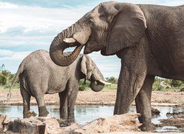 20 Photos to Inspire You to Visit Botswana