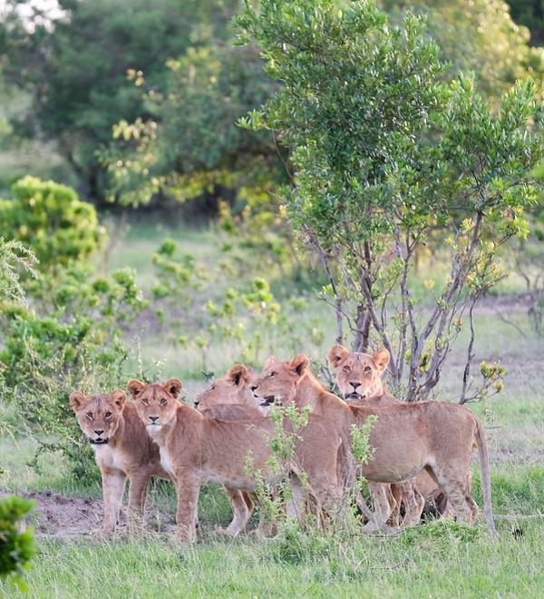 kenyaitinerary-5 ▷ Los mejores destinos de vida silvestre en el mundo