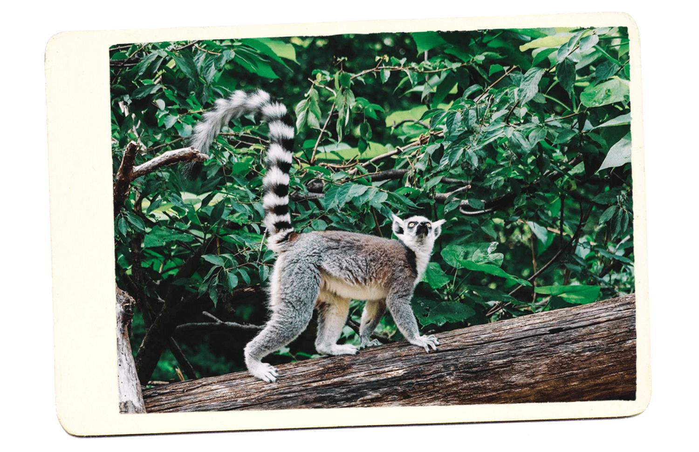 madagascar ▷ Los mejores destinos para viajar en mayo