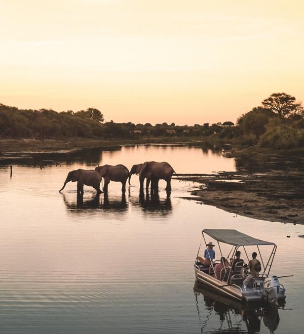 bots-3 ▷ Los mejores destinos de vida silvestre en el mundo
