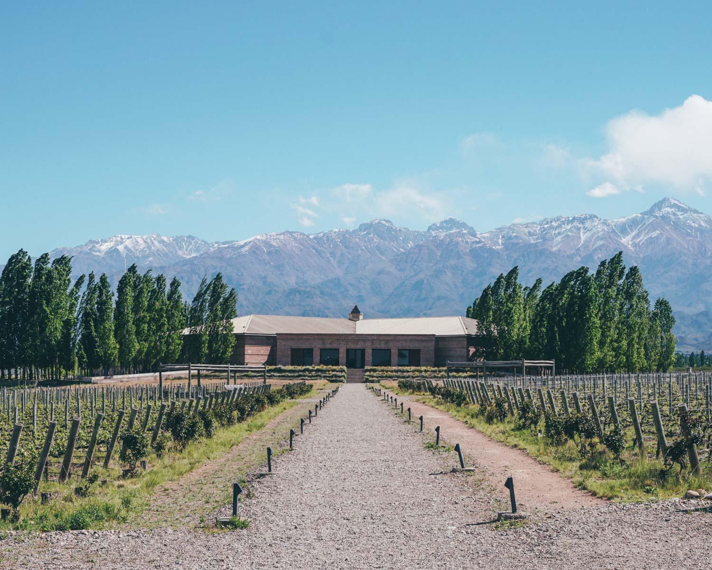 wine farm in mendoza, argentina