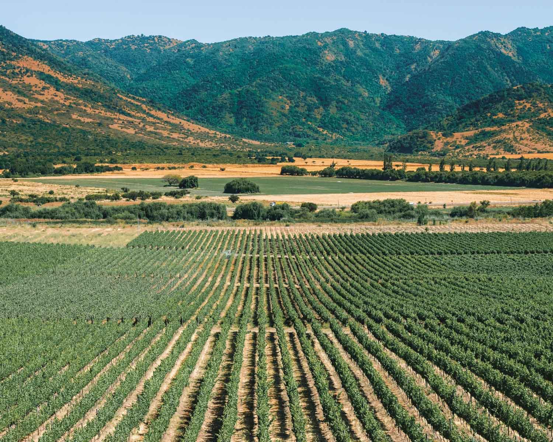 wine farm in chile