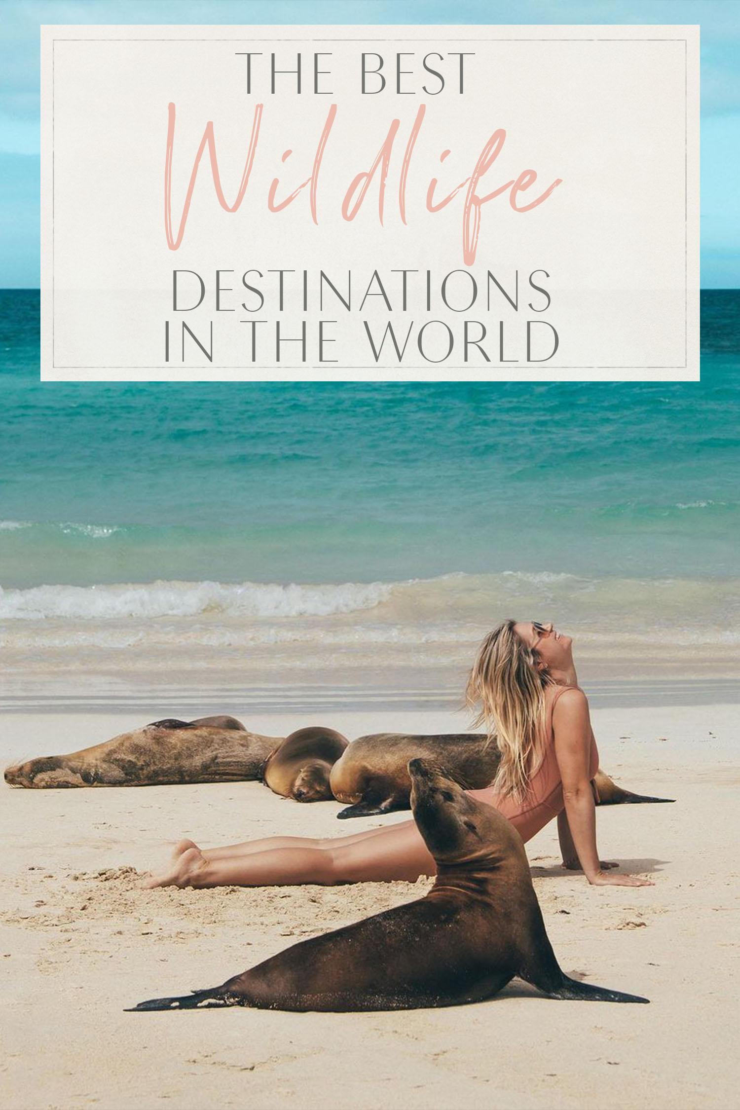 Best Wildlife Destinations World