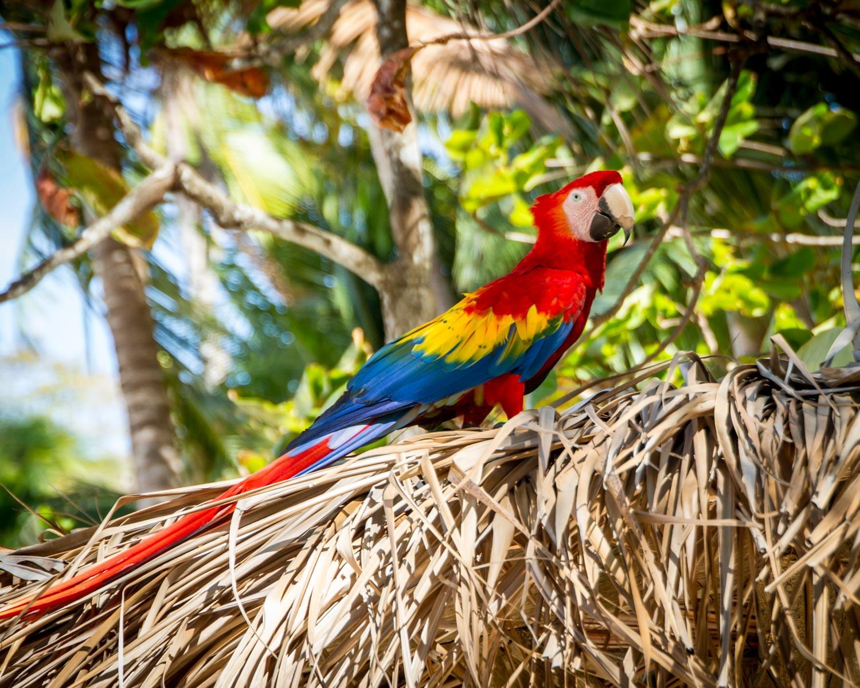 wildlife-10-2 ▷ Los mejores destinos de vida silvestre en el mundo