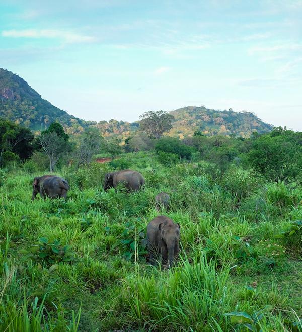 wildlife-3 ▷ Los mejores destinos de vida silvestre en el mundo