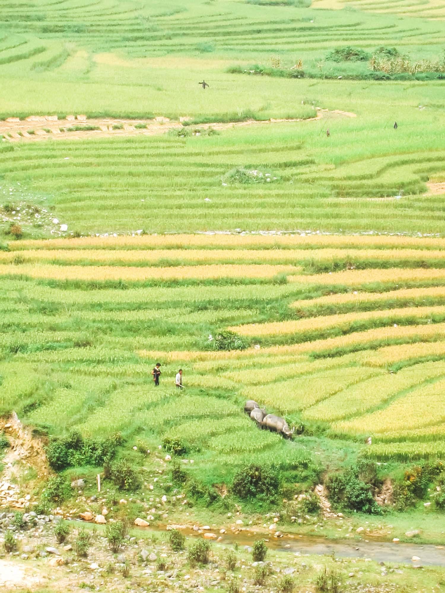 Vietnam Photos-2