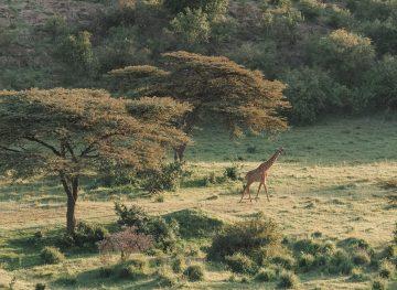 The Ultimate Kenya Travel Guide