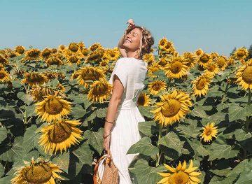 sunflower field thumb
