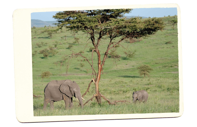baby elephant safari