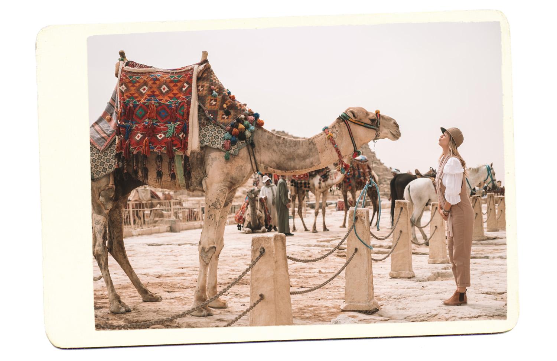 camel pyramid giza