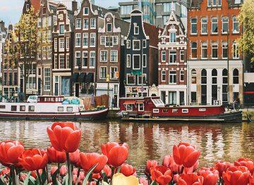 amsterdam tulips canal thumb