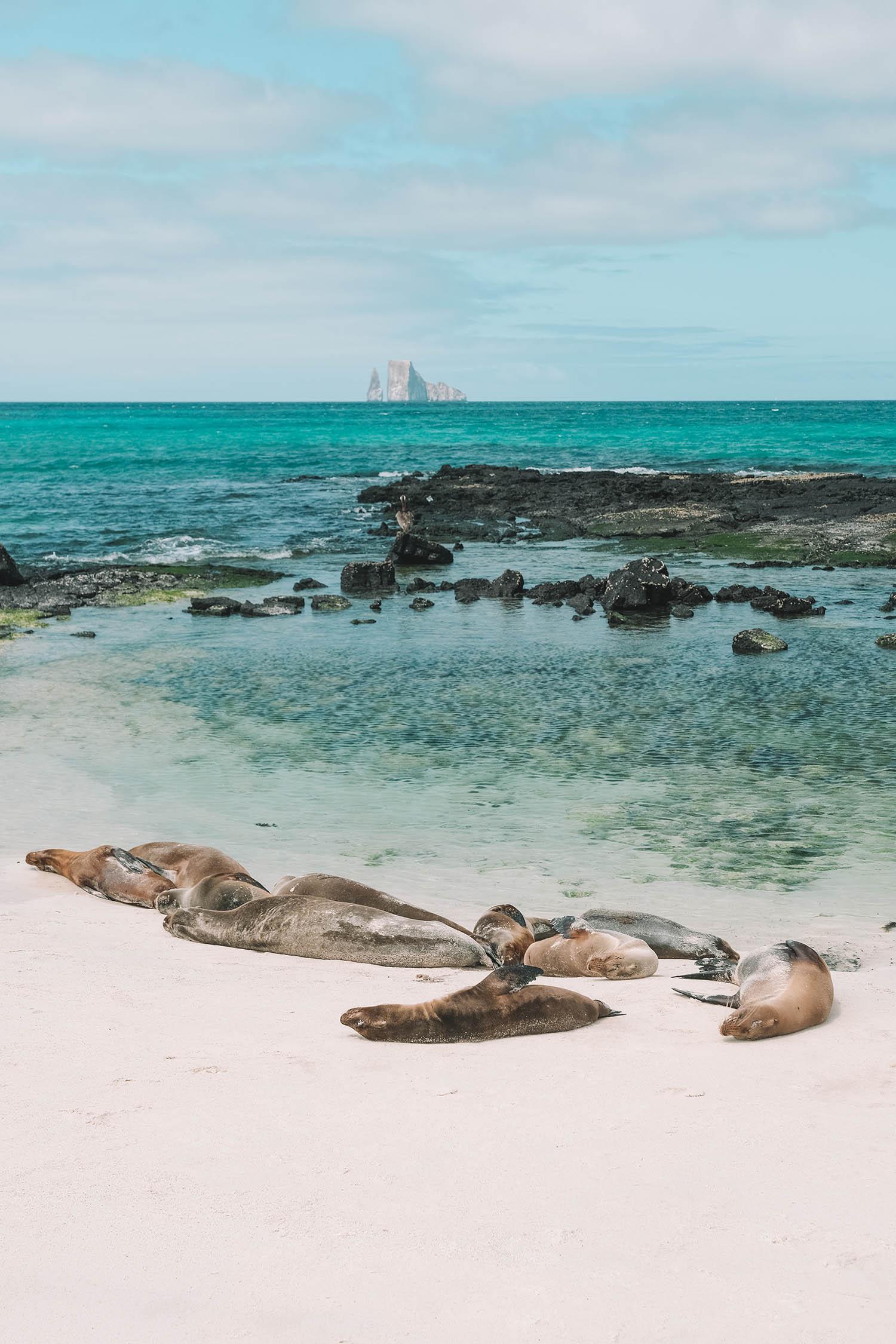 cerro brujo seals