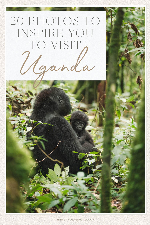 20 Photos to Inspire You to Visit Uganda Gorillas