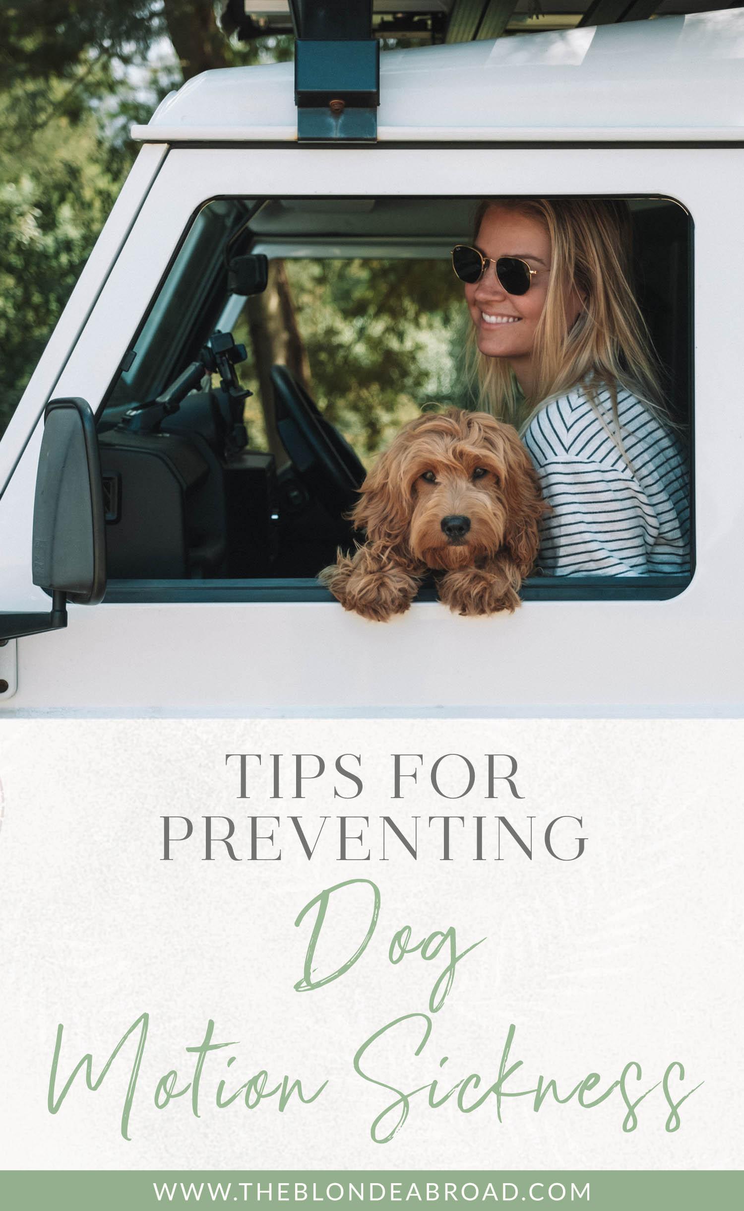 Conseils pour prévenir le mal des transports du chien