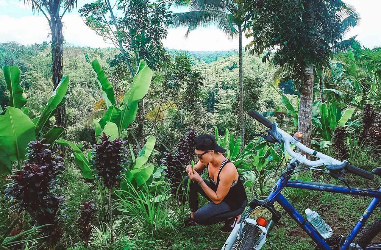 Lemongrass in Bali