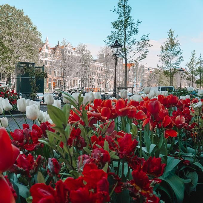 Amsterdam tulip views
