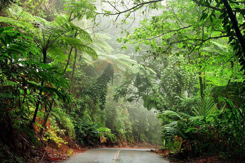 Daintree National Park Queensland